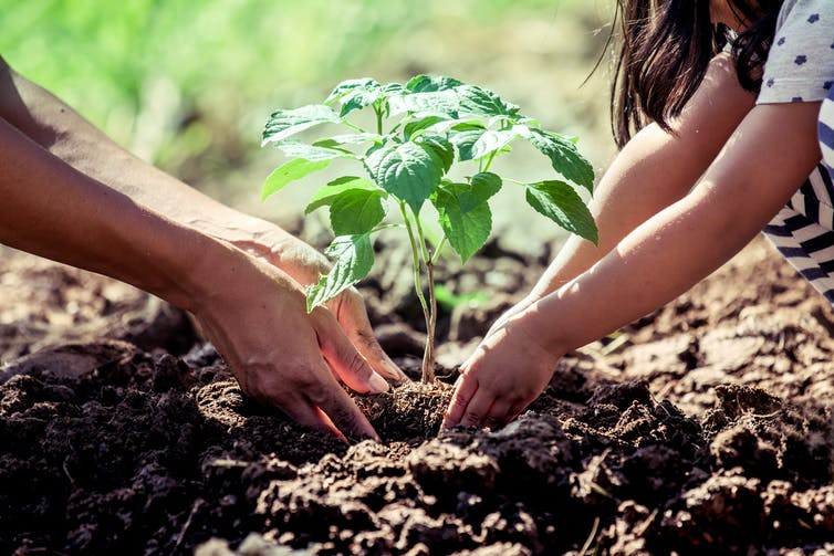 Funeral firm addresses carbon footprint with eTrees partnership
