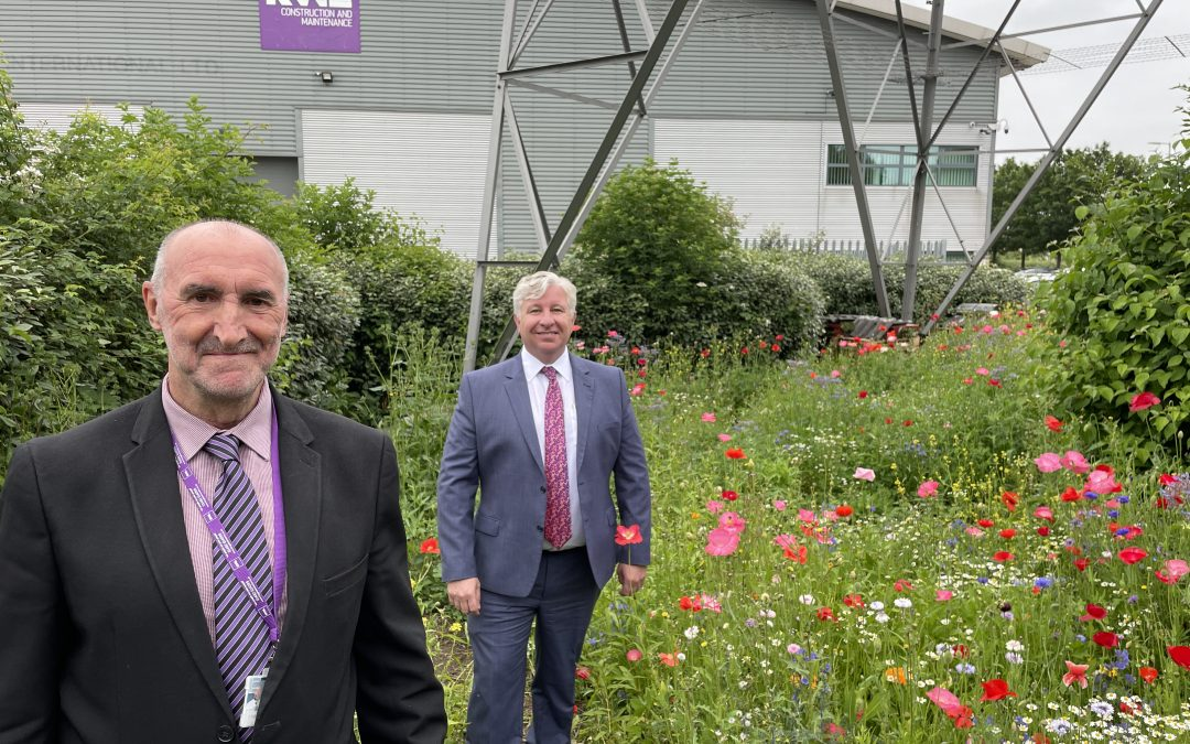 Company transforms unloved patch of car park into buzzing wildlife area